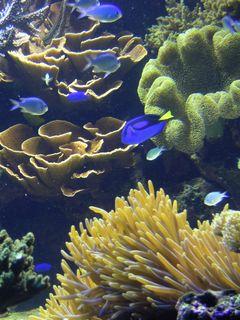 珊瑚のある風景