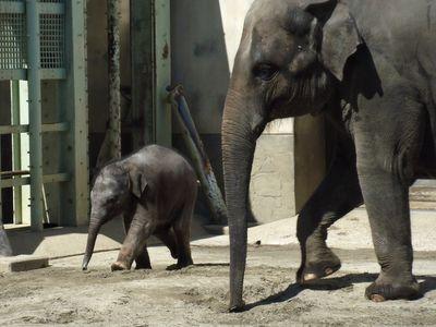 elephant_higashiyama01.jpg