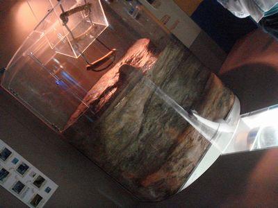 コツメ水槽サブ