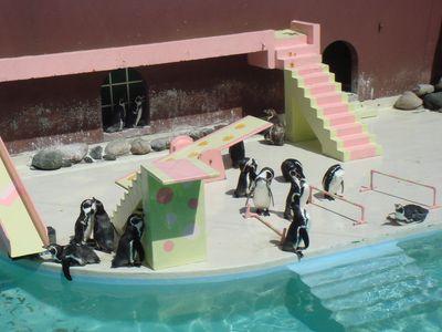 ペンギンショー前